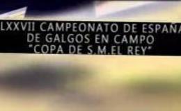 Imagen de Campeonato de España de Galgos en campo 2015 en Canal Extremadura