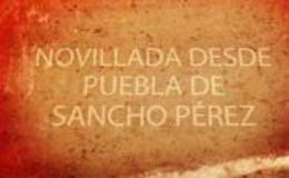 Imagen de Novillada desde Puebla de Sancho Pérez en Canal Extremadura