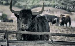 Imagen de Paisaje Herrado en Canal Extremadura
