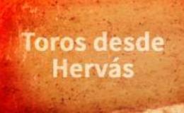 Imagen de Toros desde Hervás en Canal Extremadura