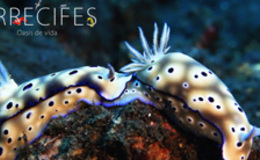Imagen de Arrecifes, oasis de vida en Castilla - La Mancha Media