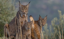 Imagen de Wildmed, el último bosque mediterráneo en Castilla - La Mancha Media