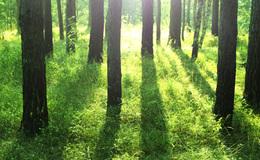 Imagen de El bosque protector en RTVE