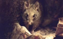 Imagen de Fauna callejera en RTVE