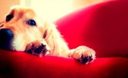 Imagen de La meva mascota i jo en RTVE