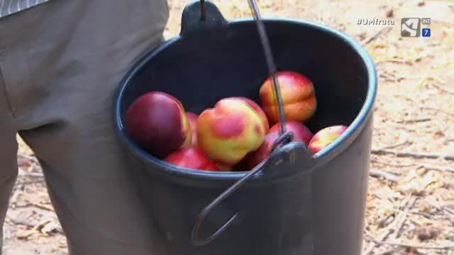 Cap.365 - A vueltas con la fruta - 08/09/2017 21:40