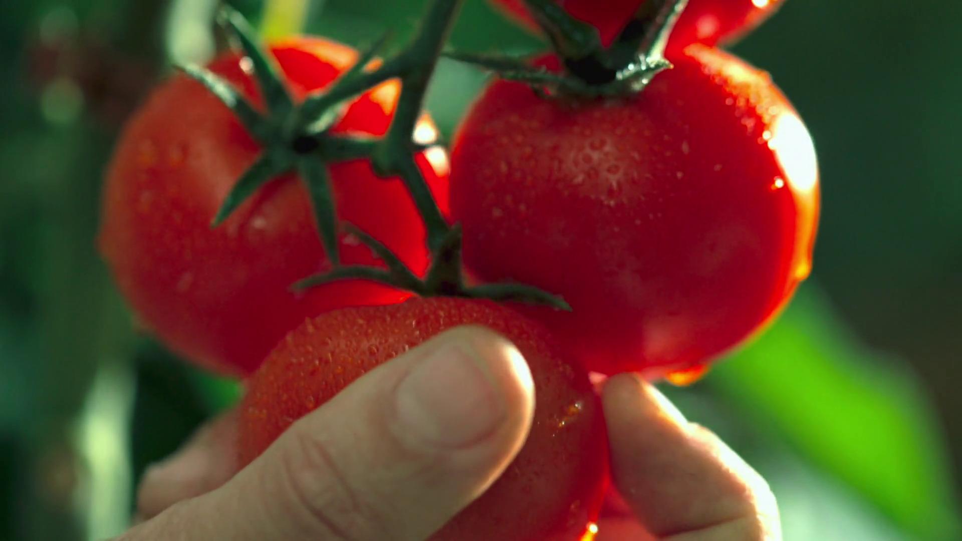 Temporada 1 Pan y tomate