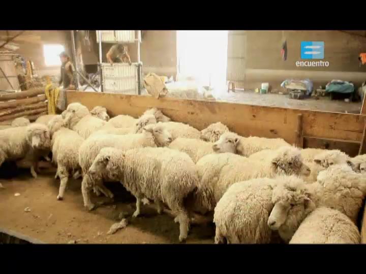 III - 19 - La ganadería ovina y caprina: Catamarca, Mendoza, Neuquen, Santa Cruz