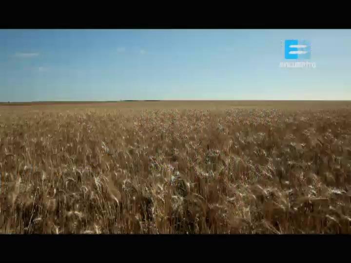 III - 24 - La agricultura pampeana: Buenos Aires, Santa Fe, Córdoba, La Pampa