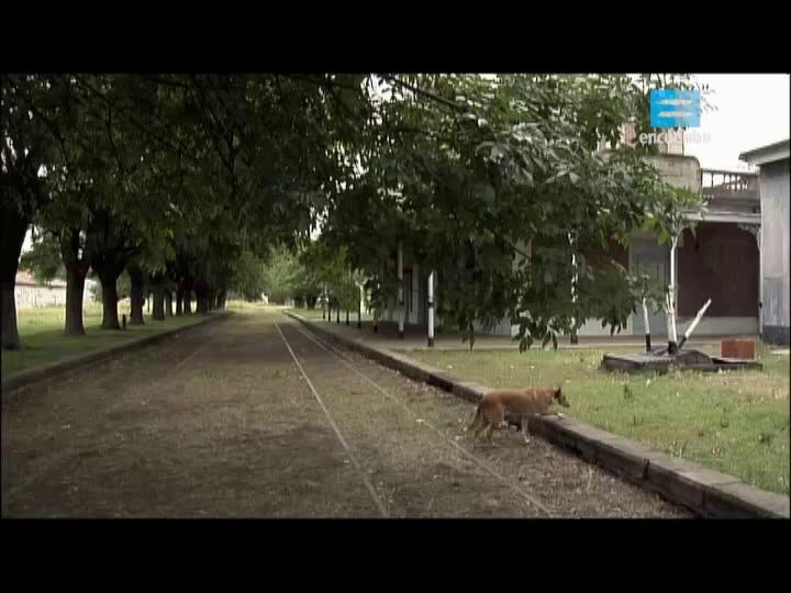 5 - Tercerización y privatización del ferrocarril