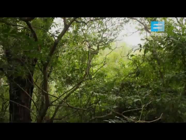 II - 6 - La selva de las yungas