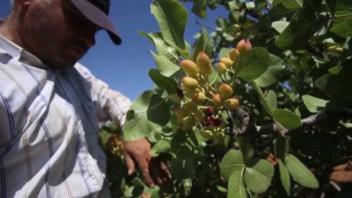Agricultores sirios vuelven a sus campos