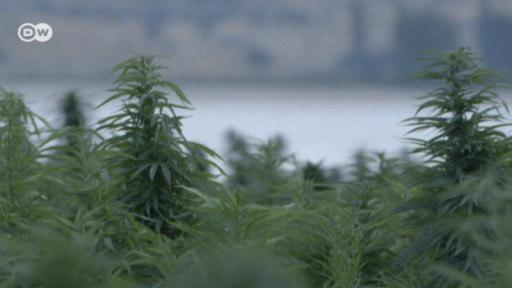 Líbano, camino a ser el primer país árabe en legalizar la marihuana