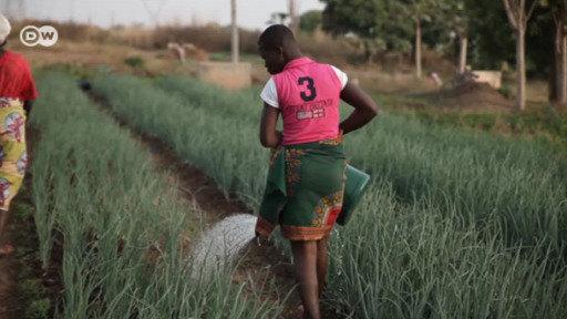 Menos fertilizantes químicos en Costa de Marfil