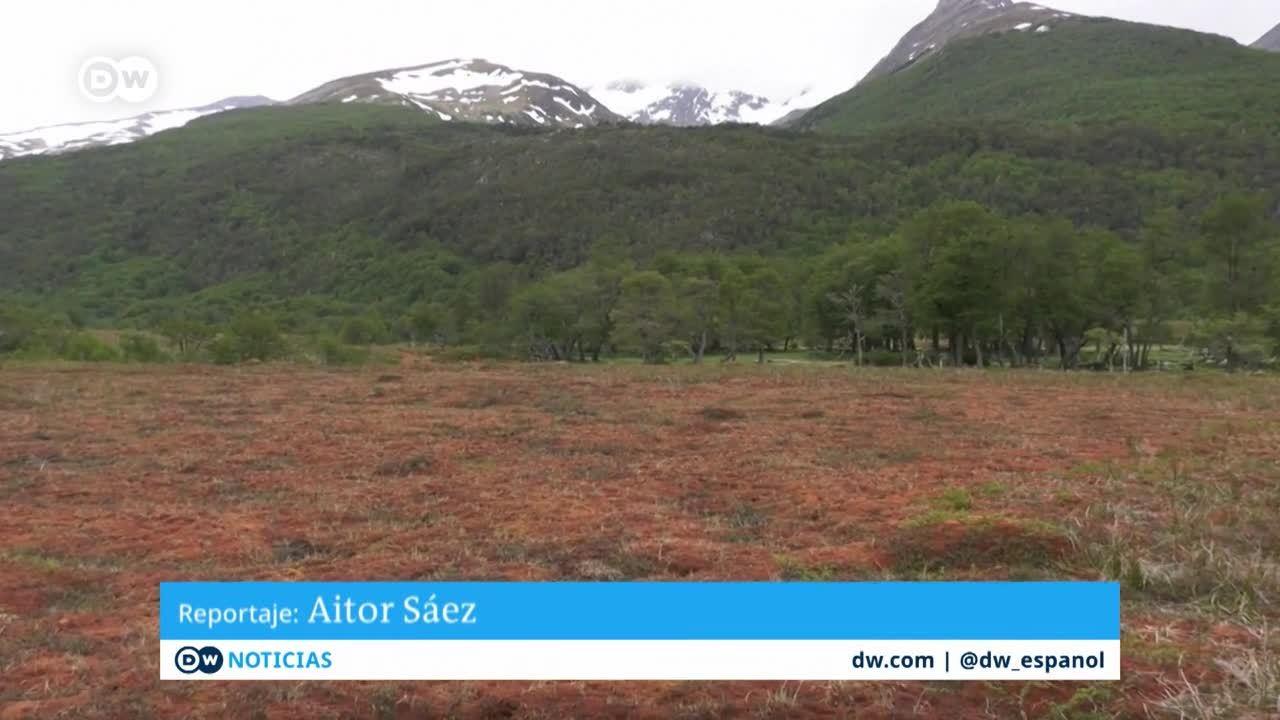 Turberas: depósitos naturales de carbono
