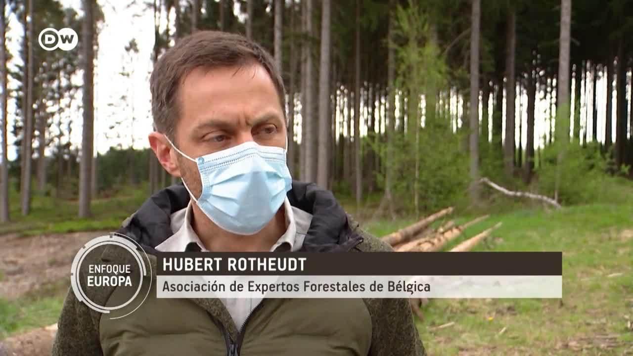 Bélgica: el bosque del futuro