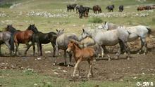 Bosnia-Herzegovina y los caballos salvajes