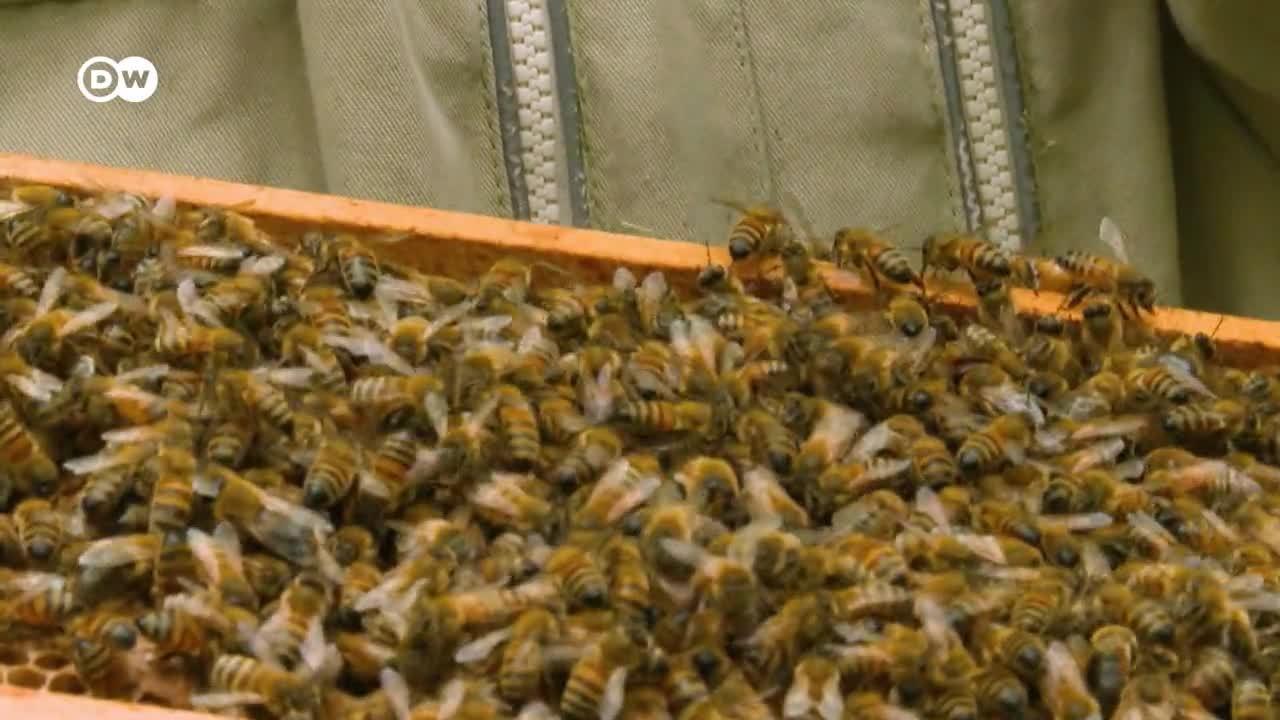 Francia: el robo de abejas alarma a los apicultores