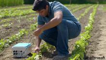La inteligencia artificial al rescate del agricultor