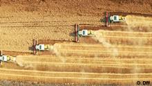 Diversidad de semillas en peligro