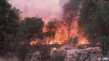 Estados Unidos: California en ola de calor