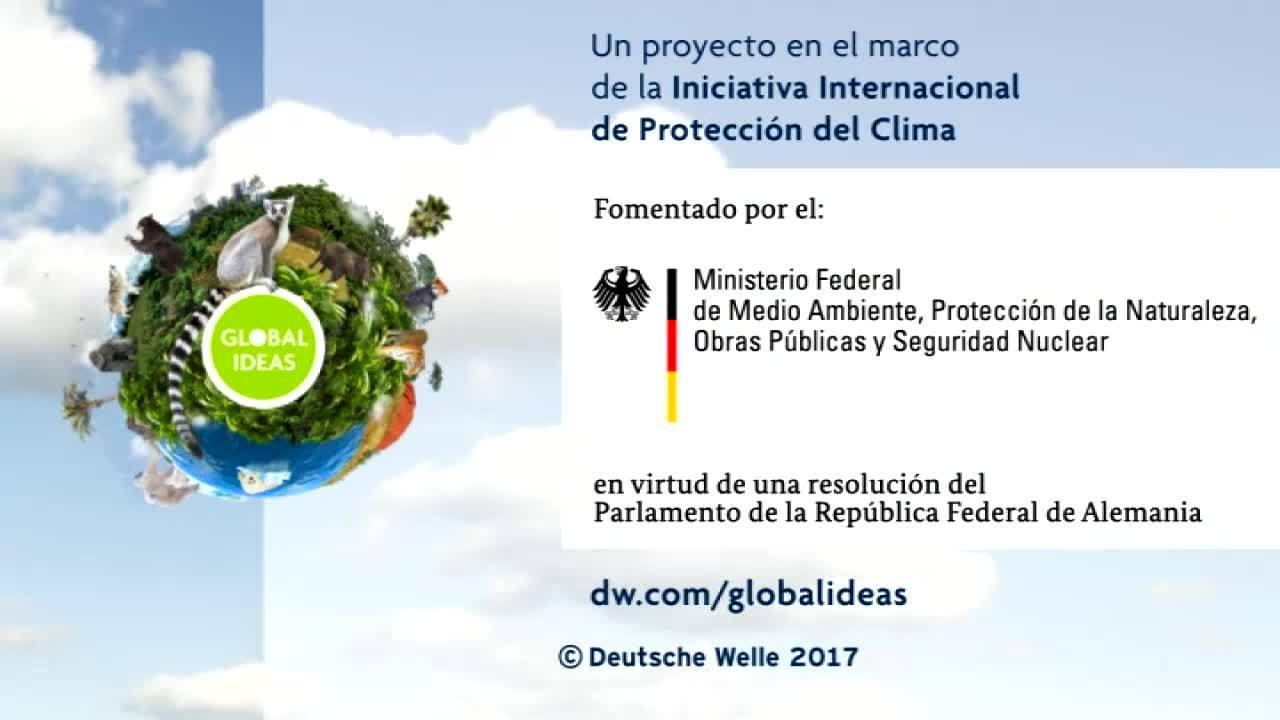Panamá: niños protectores de manglares