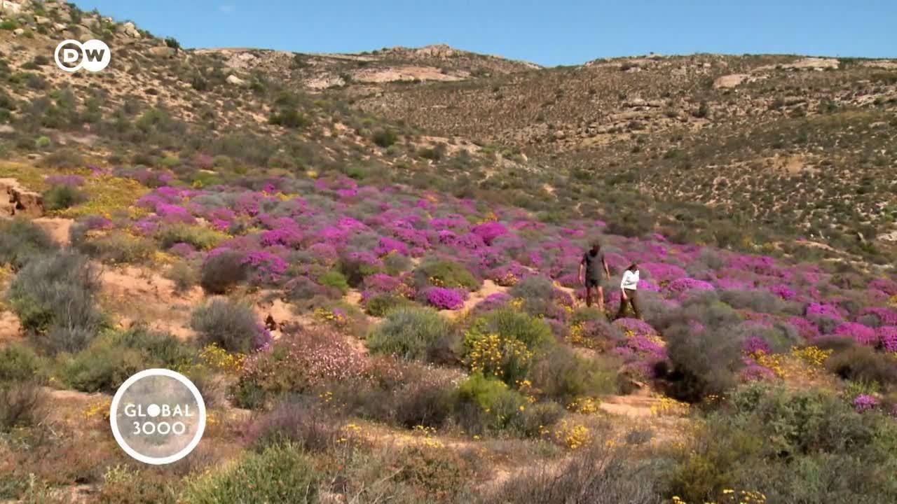 Sudáfrica: la conservación de la naturaleza como incentivo fiscal
