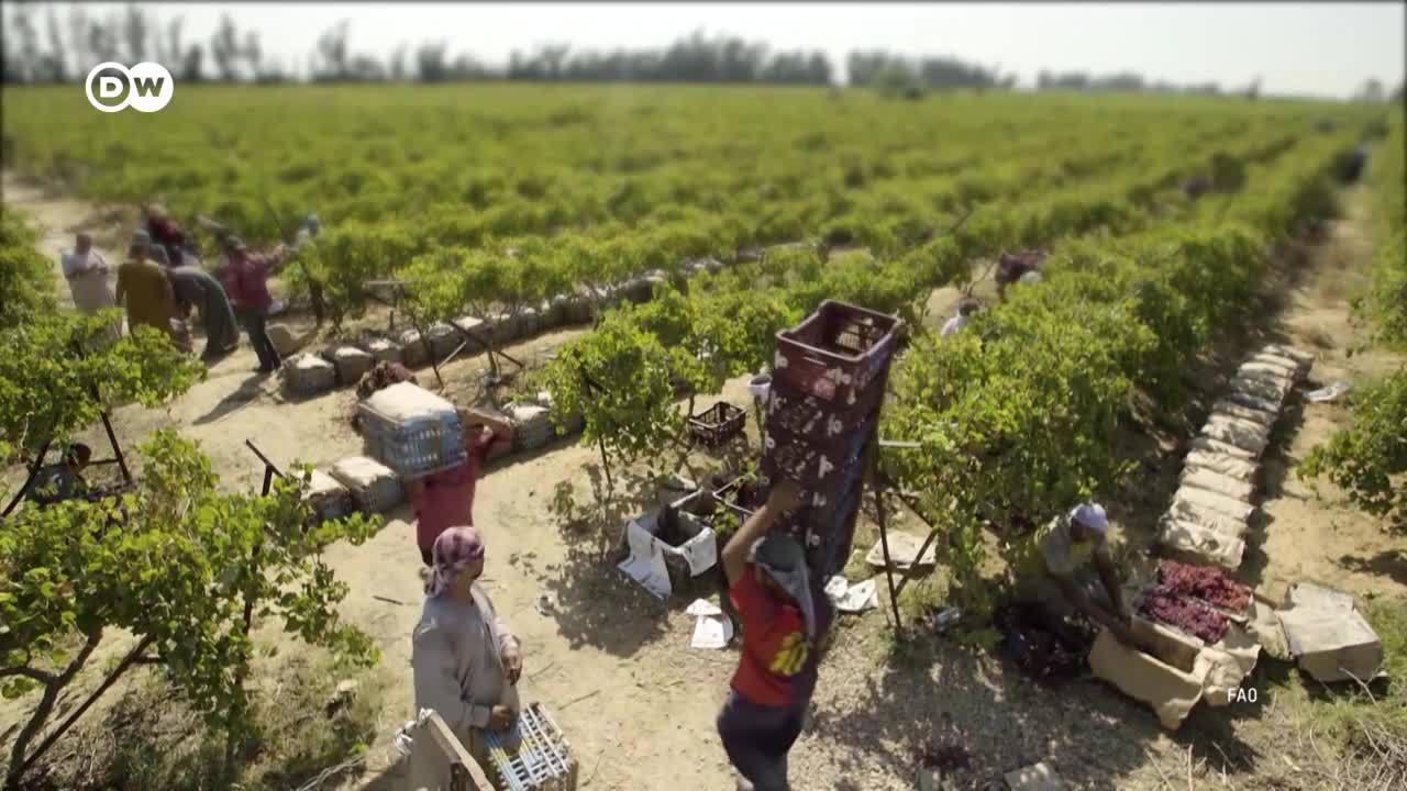 La lucha global contra los desperdicios alimenticios
