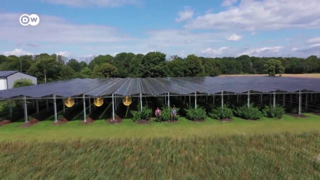 Un invernadero a base de placas solares