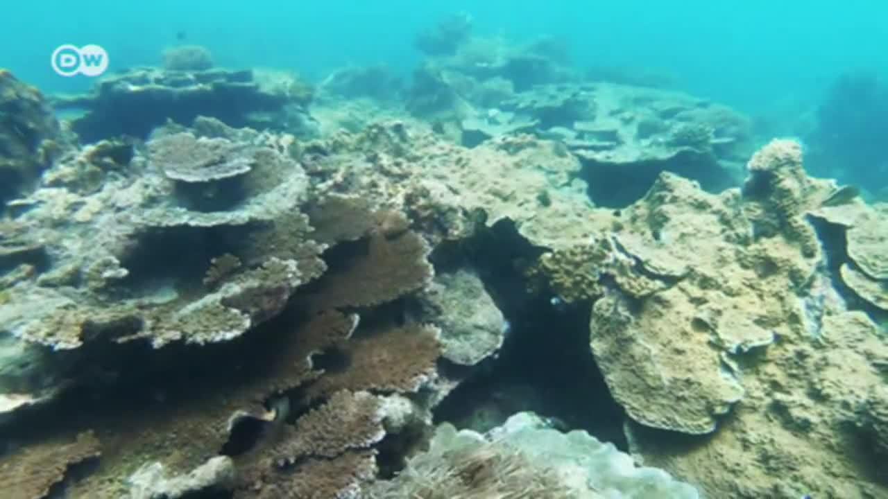 Kenia: Arrecifes de coral en peligro
