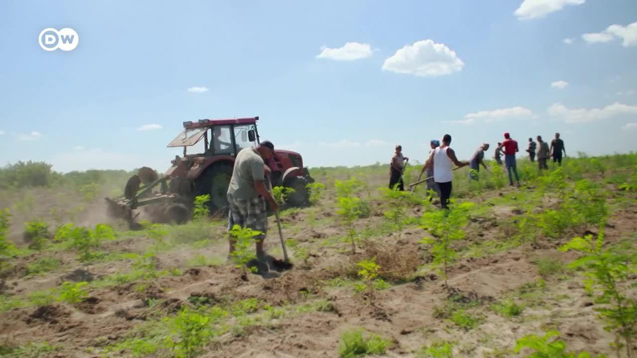 Donde crece el desierto - Cambio climático en Rumania