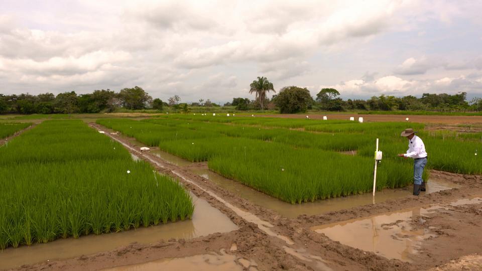 Tecnología japonesa para ayudar a los agricultores colombianos a luchar contra el cambio climático