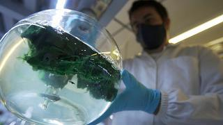 La apuesta por los microorganismos marinos para mejorar nuestra salud