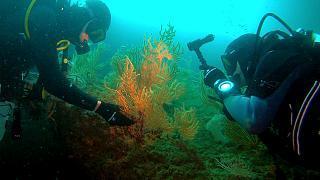 Recurso al océano en busca de soluciones para tratar enfermedades del ser humano