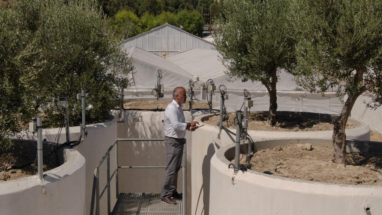 Creta aplica la IA a los olivares