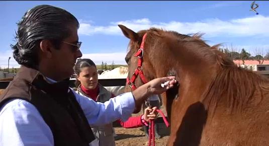 A Caballo visitamos Portugal, yeguada Alter Real y caballos de raza lusitana