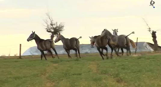 Yeguada de Mercedes Nogales, infiltración de un menudillo, ruta de la Casa de los Pastores, herradero de potros y tratante de caballos