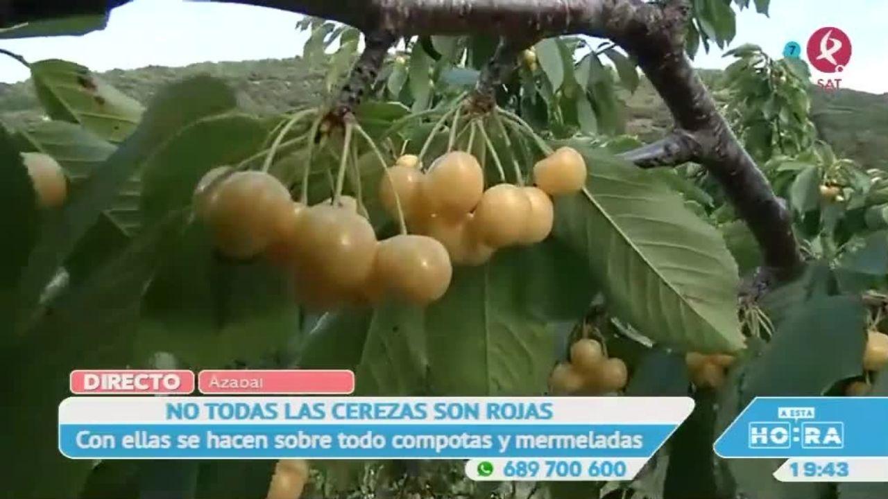 En Extremadura, no todas las cerezas son rojas