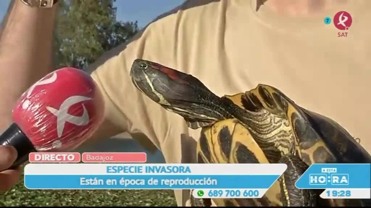 La tortuga de Florida, nueva especie invasora del Guadiana
