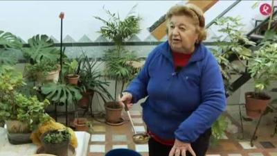 Velai: Barrio de Pozo Vela de Miajadas (29/01/20)