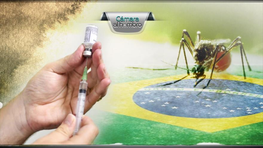 Alerta por fiebre amarilla en Brasil