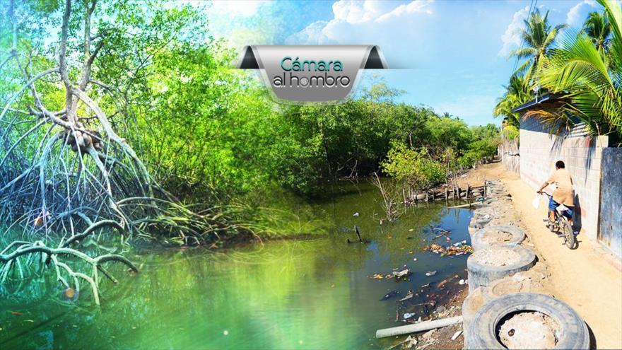 Cámara al Hombre - Degradación de manglares en El Salvador