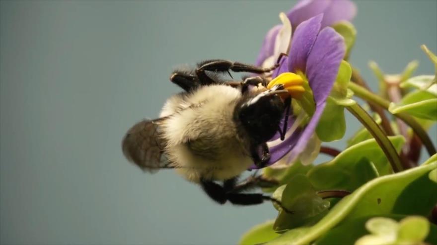 Abejas, Orejas y narices, Insectos: alimento del futuro, restaurante submarino