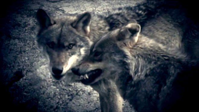 Temporada 5 Programa 172 - El niño de los lobos