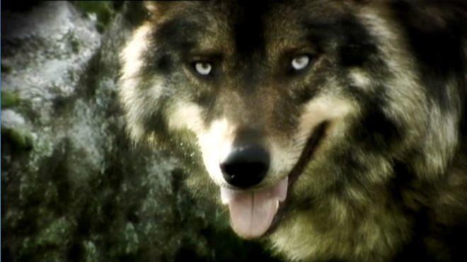 Temporada 6 Programa 220 - Operación Lobo | Cuarto Milenio ...