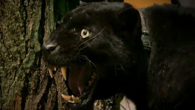 Temporada 6 Programa 238 - Alien Cats   Cuarto Milenio   Mitele ...