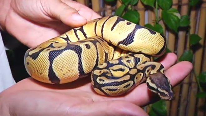 Temporada 1 Programa 3 - Serpientes en Bangkok