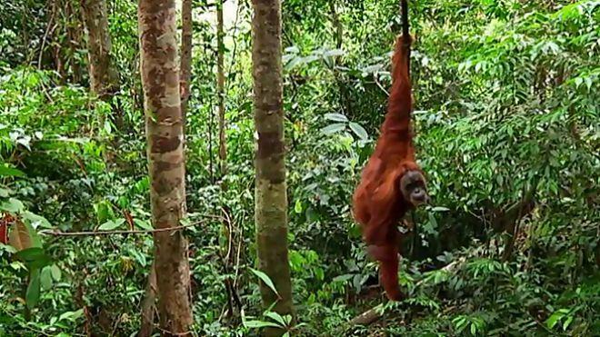 Temporada 1 Programa 6 - Orangutanes