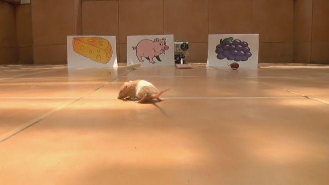 Temporada 3 Programa 27 - Desmontando mitos animales