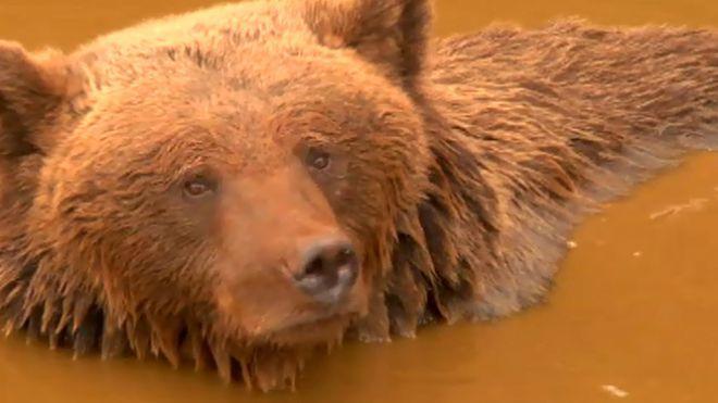 Temporada 1 Programa 5 - Tras las huellas del oso pardo